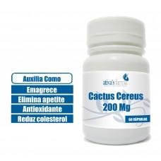 Cactus cereus 200 Mg C/ 60 Cápsulas