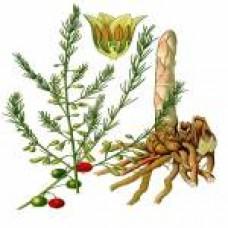 Shatawari (Asparagus Racemosus) 300mg - 60 Cápsulas