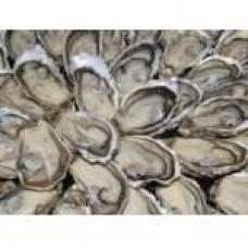 Cálcio de Ostras 600mg 60 Cápsulas