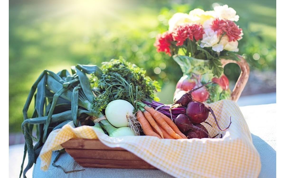 Alimentos orgânicos: por que eles são melhores?
